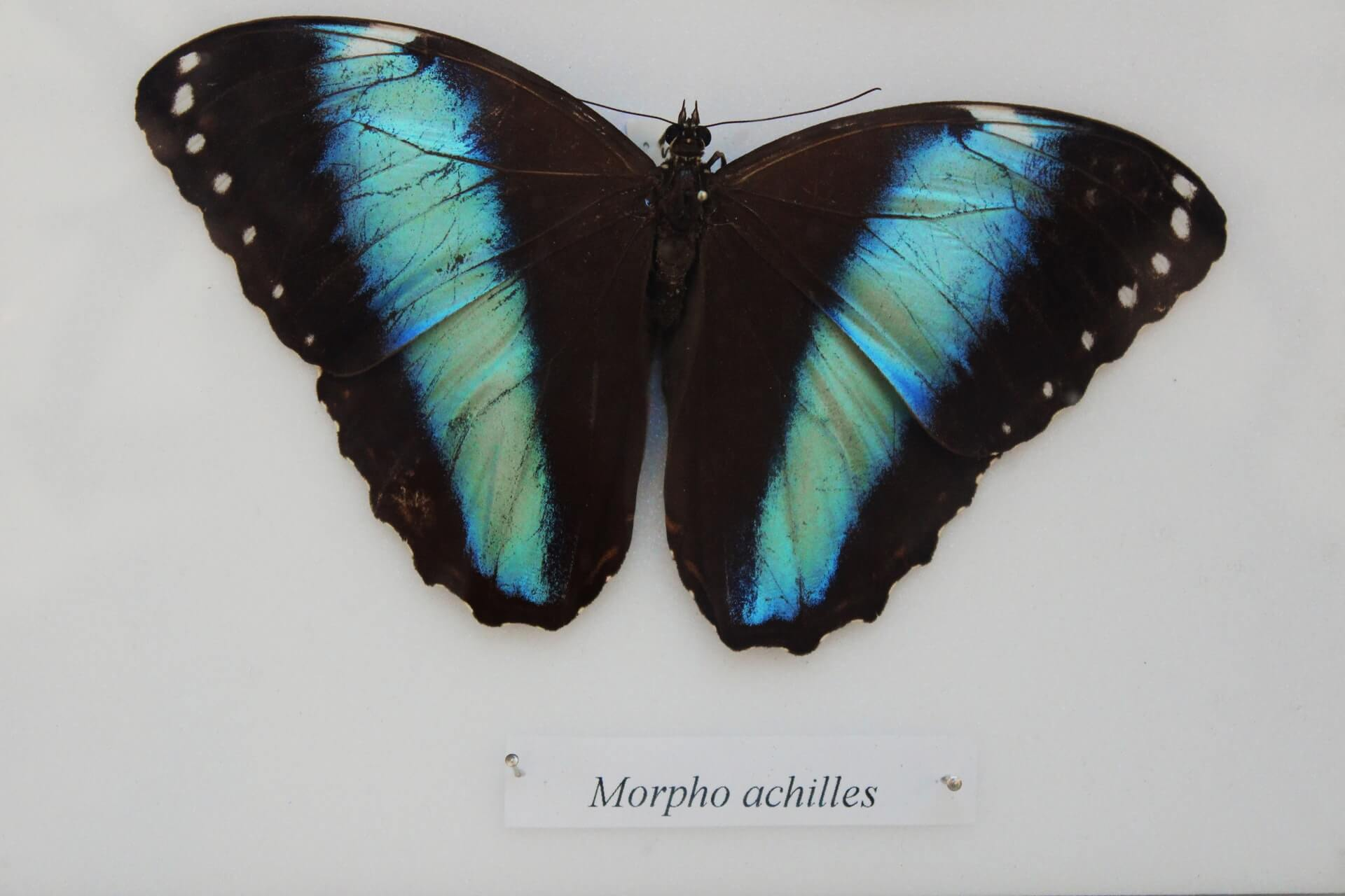 Butterfly Effects Help Change the World
